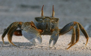 sand-crab-wallpapers_14208_1920x1200